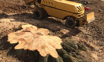 Stump Removal in Phoenix AZ Stump Removal Services in Phoenix AZ Stump Removal Professionals Phoenix AZ Tree Services in Phoenix AZ