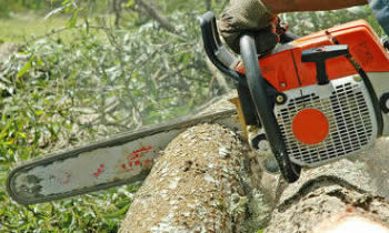 Tree Removal in Phoenix AZ Tree Removal Quotes in Phoenix AZ Tree Removal Estimates in Phoenix AZ Tree Removal Services in Phoenix AZ Tree Removal Professionals in Phoenix AZ Tree Services in Phoenix AZ