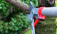 Tree Pruning Services in Phoenix AZ
